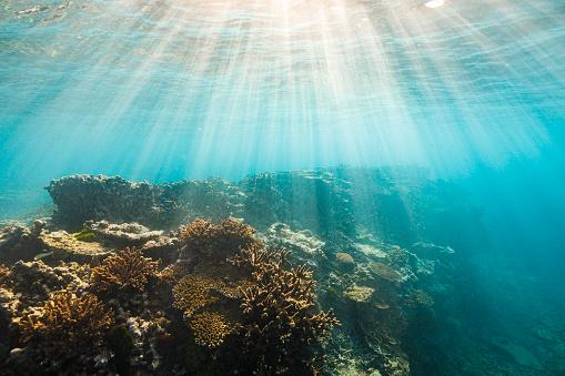 Soft Coral「Coral reef atoll ecosystem in clear aqua marine blue ocean with warm light rays」:スマホ壁紙(4)