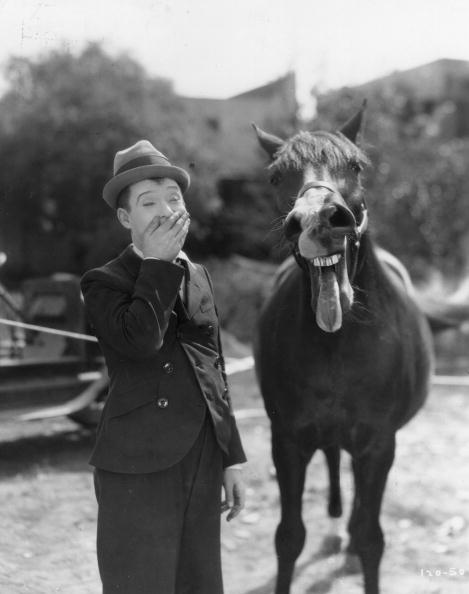 Horse「Harry Langdon」:写真・画像(4)[壁紙.com]
