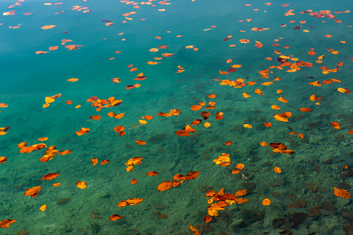 Water Surface「Alatsee with autumn leaves」:スマホ壁紙(7)