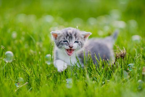Pets「Kitten in a Field with Bubbles stock photo」:スマホ壁紙(1)