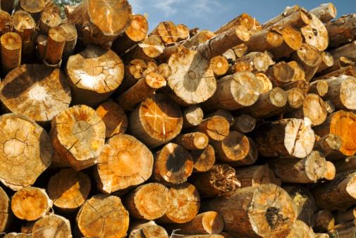 Destruction「Logs of wood, close-up」:スマホ壁紙(9)