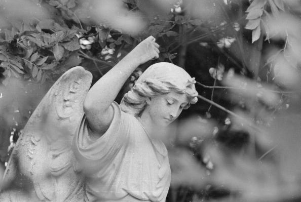 Empty「Highgate Cemetery」:写真・画像(5)[壁紙.com]