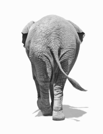 Walking「Elephants behind」:スマホ壁紙(0)