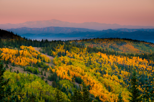 Aspen Tree「Aspen trees and mountains.  Westcliffe, Colorado.」:スマホ壁紙(6)