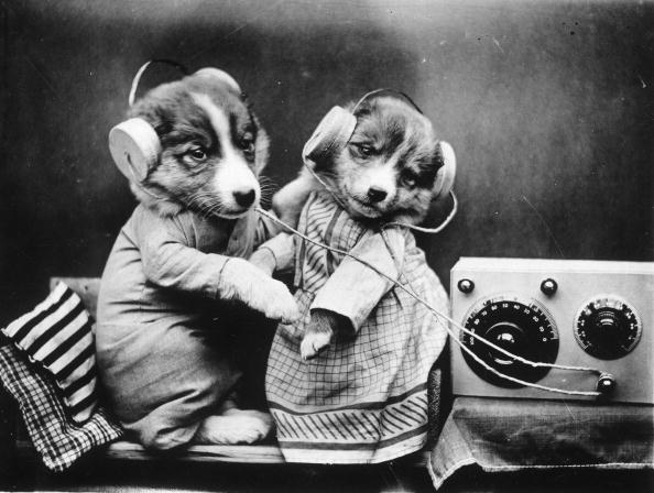 Listening「Revelling Pups」:写真・画像(13)[壁紙.com]