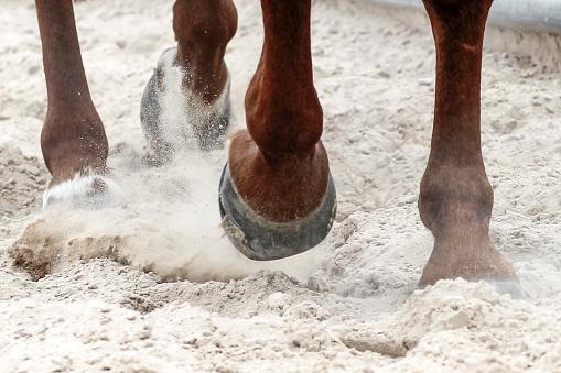 Horse「Horses photoshoot」:スマホ壁紙(3)