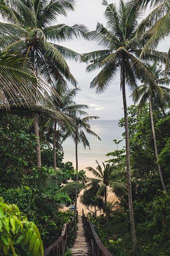 Footbridge「Path through palm tees towards Nai Thon Beach, Phuket, Thailand」:スマホ壁紙(18)