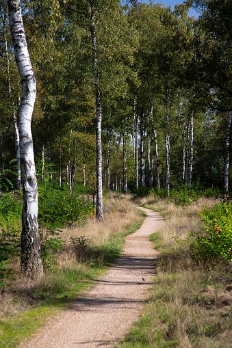 North Brabant「Path through forest」:スマホ壁紙(1)