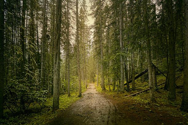 path through dense forest:スマホ壁紙(壁紙.com)