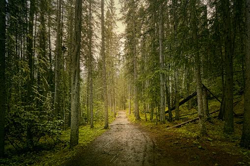 アルバータ州「path through dense forest」:スマホ壁紙(3)