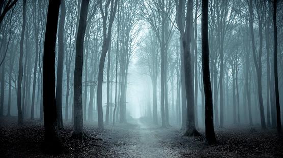 Sulking「Path through a misty forest during a foggy winter day」:スマホ壁紙(4)
