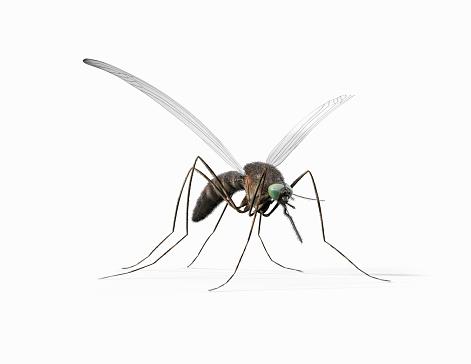 Limb - Body Part「Mosquito」:スマホ壁紙(9)