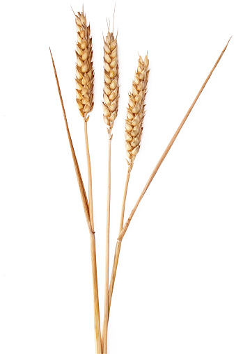 Whole Wheat「Ears of wheat on a white background」:スマホ壁紙(4)
