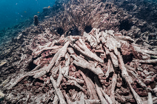 Ecosystem「Dead underwater coral reef with coral bleaching due to climate change」:スマホ壁紙(10)