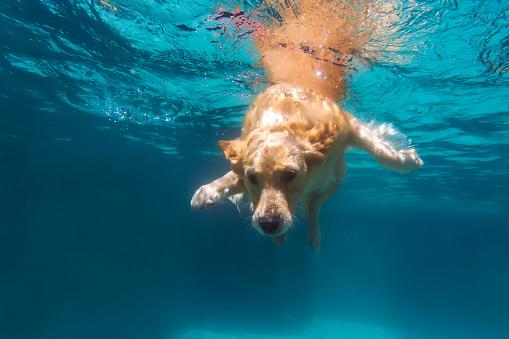 Success「Dog swimming in pool」:スマホ壁紙(16)