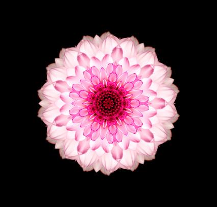 Intricacy「Chrysanthemum flower mandala」:スマホ壁紙(4)