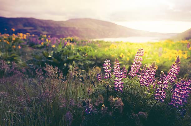 Wildflowers In Morning Sunrise:スマホ壁紙(壁紙.com)