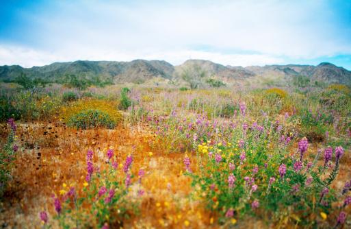 コットンウッド山脈「Wildflowers near mountains」:スマホ壁紙(3)