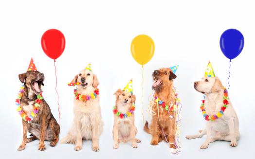 Pets「Happy Party Dogs」:スマホ壁紙(9)