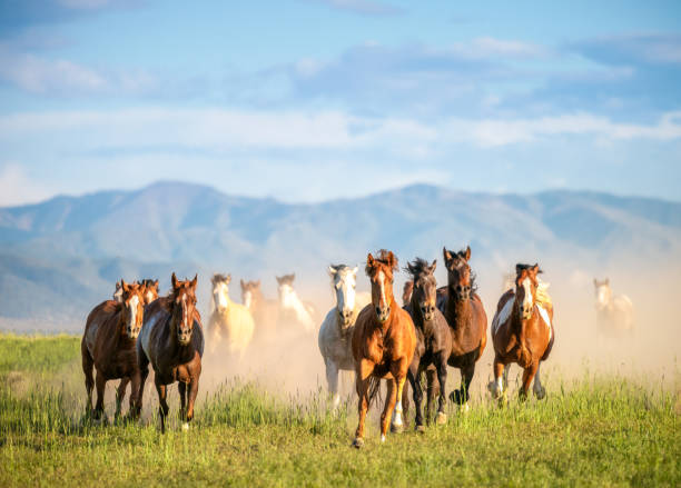 Galloping wild horses in the wilderness:スマホ壁紙(壁紙.com)