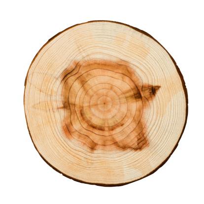 Log「Wood Texture」:スマホ壁紙(5)