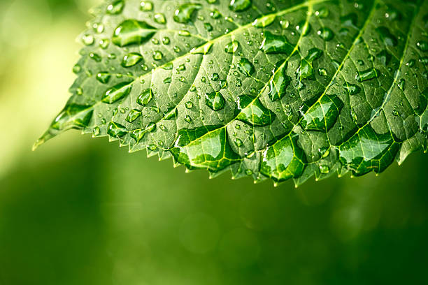 Water drops on leaf in sunshine:スマホ壁紙(壁紙.com)