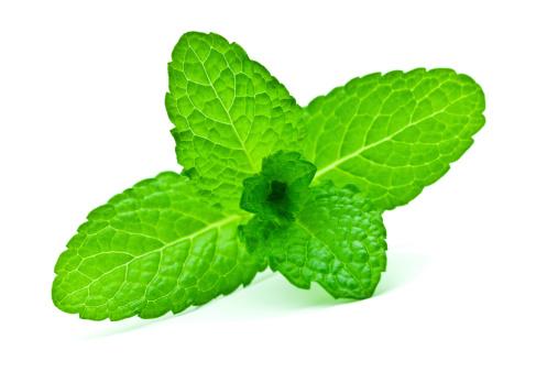Leaf「Mint」:スマホ壁紙(14)