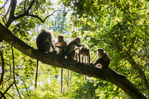Animal Behavior「Young Monkey's Cleaning Eachother」:スマホ壁紙(3)