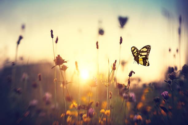 Butterfly At Sunset:スマホ壁紙(壁紙.com)