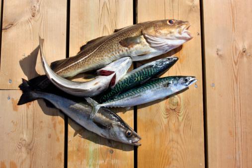 Pollock - Fish「Freshly caught fish laying on wood dock」:スマホ壁紙(11)