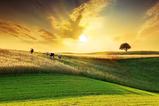Females「Golden Sunset over Idyllic Farmland Landscape」:スマホ壁紙(14)