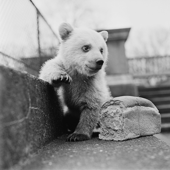 Loaf of Bread「Bread For A Bear」:写真・画像(7)[壁紙.com]