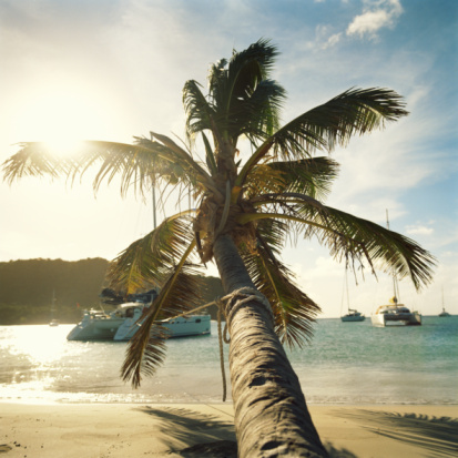 Salt Whistle Bay「Palm tree on beach and sailboats moored in bay」:スマホ壁紙(14)