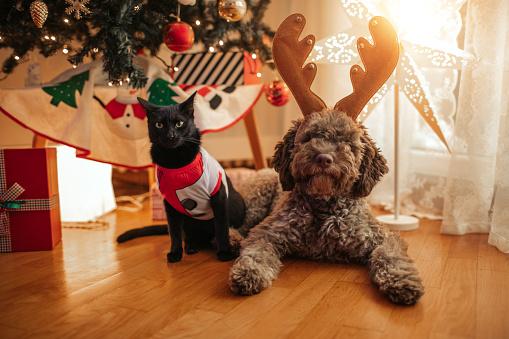 black cat「Christmas Pets」:スマホ壁紙(15)