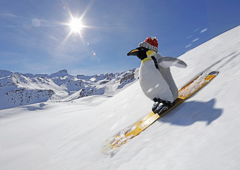 Offbeat「Stuffed penguin skiing」:スマホ壁紙(9)