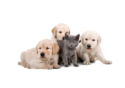 Pets「four buddies」:スマホ壁紙(1)
