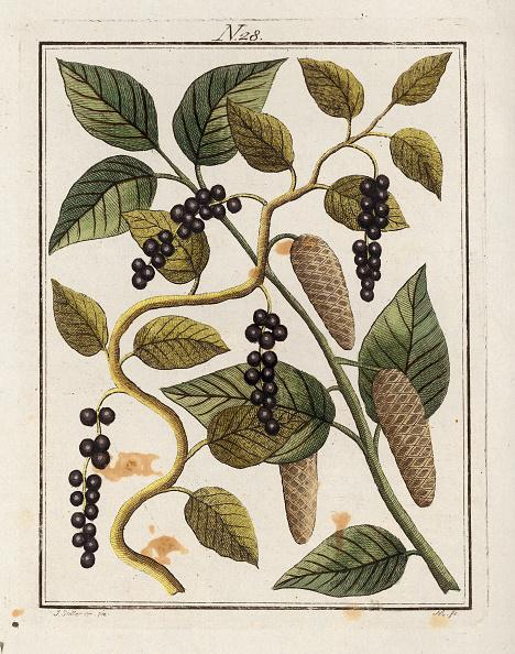 Spice「The Pepper. From Die Welt In Bildern. Band 3. Baumeister. Vienna. 1790.」:写真・画像(15)[壁紙.com]