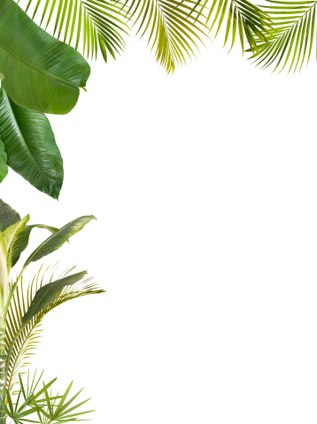 Palm Leaf「Tropical leaves frame isolated on white with copy space」:スマホ壁紙(19)