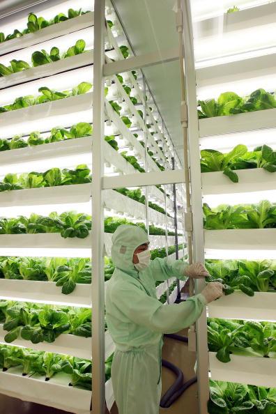 縦位置「Plant Factories Propose A New Style Of Agriculture」:写真・画像(2)[壁紙.com]