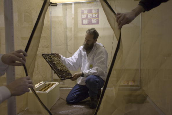 Rick Scibelli「Los Alamos Laboratory Trains Bees To Detect Explosives」:写真・画像(13)[壁紙.com]