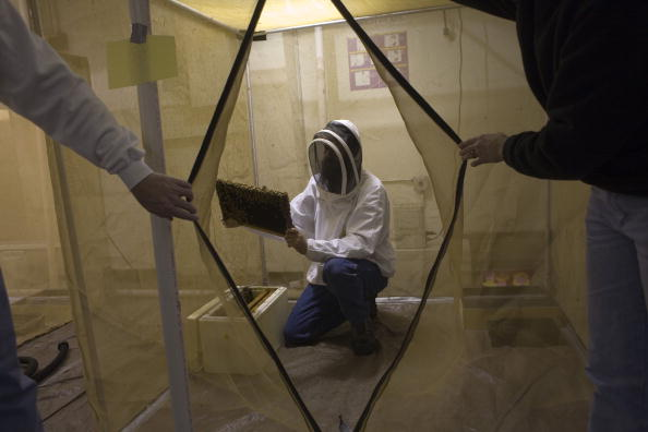 Rick Scibelli「Los Alamos Laboratory Trains Bees To Detect Explosives」:写真・画像(16)[壁紙.com]
