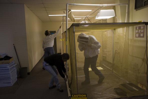 Rick Scibelli「Los Alamos Laboratory Trains Bees To Detect Explosives」:写真・画像(11)[壁紙.com]