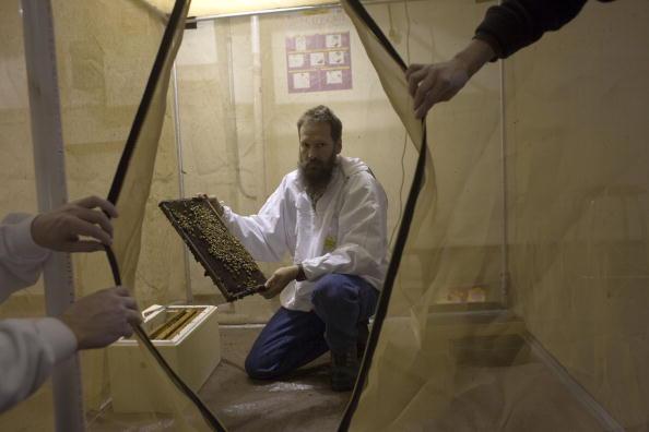 Rick Scibelli「Los Alamos Laboratory Trains Bees To Detect Explosives」:写真・画像(12)[壁紙.com]