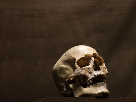 Human Skull「Human skull, studio shot」:スマホ壁紙(4)