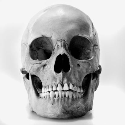 Human Skull「Human skull」:スマホ壁紙(5)