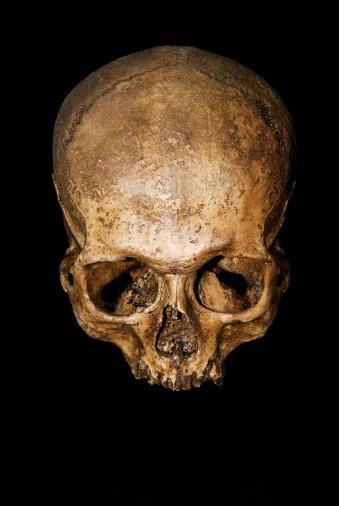 Human Skull「Human skull」:スマホ壁紙(10)