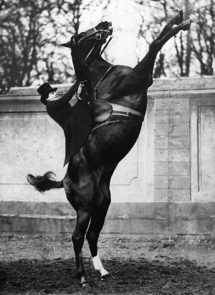 Horse「Molier Riding」:写真・画像(7)[壁紙.com]