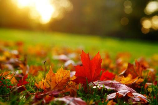 かえでの葉「Germany, Saxony, Maple leaves in autumn」:スマホ壁紙(13)