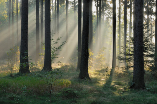 ������「Germany, Saxony, Misty forest」:スマホ壁紙(3)