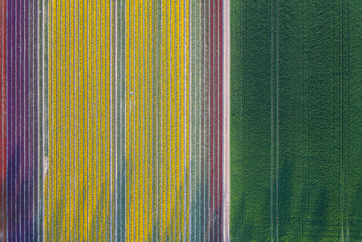 田畑「Germany, Saxony-Anhalt, aerial view of tulip fields」:スマホ壁紙(5)